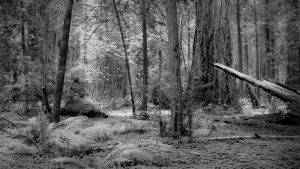 Image of forest for Kayhan Ghodsi
